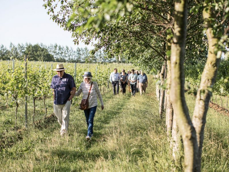 Vineyard tours