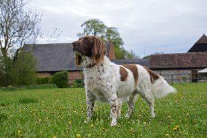 Gunner the dog - part of our family-run vineyard