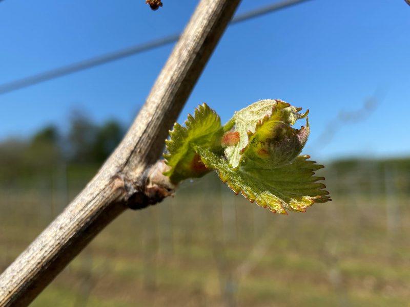 Spring Has Sprung at Saffron Grange