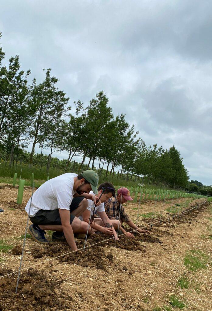 Planting 2021